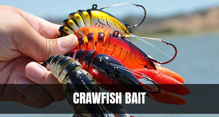 Best Crawfish Bait